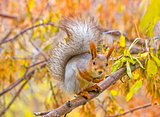 Squirrel on the branch