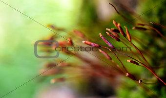 anophyte macro shot