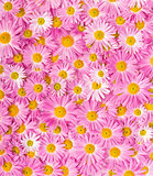 Pink and yellow flowers background