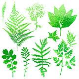 Set of garden watercolor leaves.