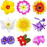 Colorful Flowers Cutouts