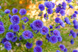 Colorful  bright blue flowers, background