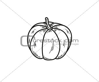sketch of the pumpkin