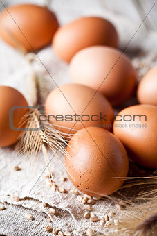 fresh brown eggs, wheat seeds and ears