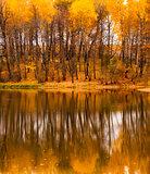 Fall refletion