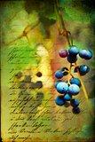 Renaissance Grapes