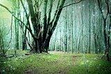 Fairy Woodland