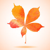 Orange watercolor painted vector chestnut leaf