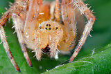 Macro shot of a  spider