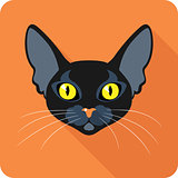 Bombay Black Cat icon flat design