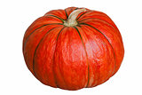 Pumpkin on white.