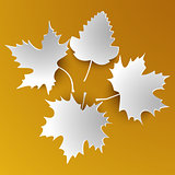 Autumn abstract white leaves