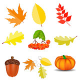 Shiny Autumn Natural Icons  Vector Illustration