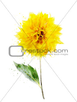 Watercolor Image Of Yellow Dahlia