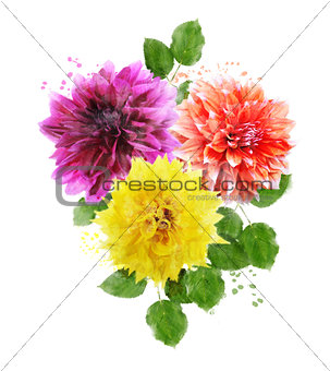 Watercolor Image Of  Dahlia Flowers