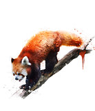 Watercolor Image Of  Red Panda