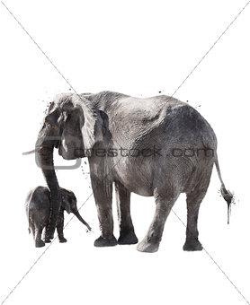 Watercolor Image Of  Elephants