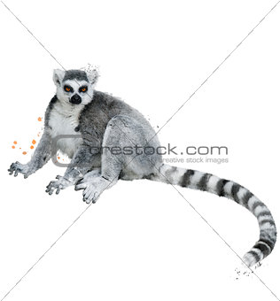 Watercolor Image Of Ring-tailed Lemur