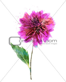 Watercolor Image Of Pink Dahlia