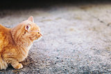 Red Cat Sitting On Concrete Floor