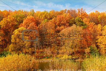 autumn forest on the bank of the river
