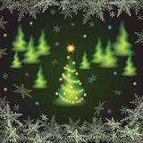 Christmas fir trees.