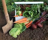 Harvest of fresh vegetables