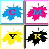 CMYK Maple Logo