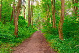 pedestrian path leads into the woods