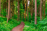 dirt road goes deep into the summer forest
