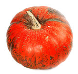 Red ripe pumpkin