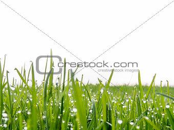 closeup meadow
