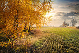 Autumn in the field