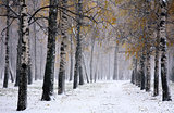 Snowstorm in golden autumn