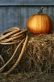 Large pumpkin with rope on hay