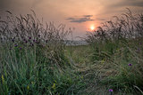 Sunrise landscape in Summer looking through wild thistles and gr
