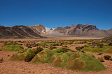 Cushion Plants in the Atacama