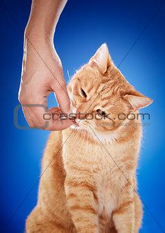 Cat's Treat