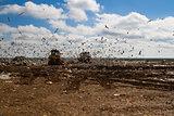 Landfill rubbish bulldozers processing garbage
