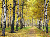 Pathway in golden autumn park
