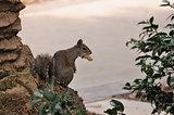 smokin' squirrel 3