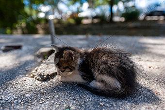 Small cat resting