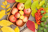 Autumn apples and leaves