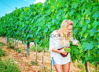 Beautiful young winemaker