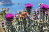 Bees over flowers weeds (closeup)
