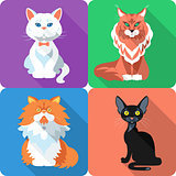 Set Cat icon flat design