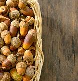 basket full of acorns