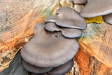 Mushrooms on tree trunk in autumn