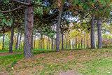 Autumn Landscape, Park in Autumn.