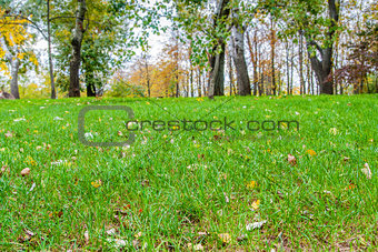 Autumn Landscape, background of autumn leaves.